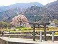 広神社からワニ塚の桜を見る - panoramio.jpg