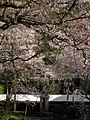 本善寺(honzenji)2010-3-30 - panoramio - ys1979 (5).jpg
