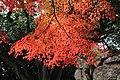 津山城の紅葉 (32770358308).jpg