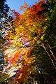 神護寺にて 京都市右京区 Jingoji 2013.11.21 - panoramio.jpg