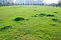翠绿的芳草地Scenery in GhuangZhou, China - panoramio (6).jpg