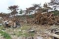 野蒜 - panoramio (14).jpg