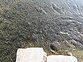鴨川 - panoramio (16).jpg