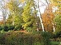 -2019-11-10 Trees in Autumn, Overstrand, Norfolk (1).JPG