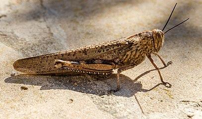 004 2014 03 17 Insekten.jpg