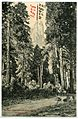 08251-Yosemite-1906-Distant View of Cathedral Spires-Brück & Sohn Kunstverlag.jpg