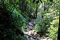 1045 ทางเดินน้ำตกคลองพลู อุทยานแห่งชาติหมู่เกาะช้าง.jpg