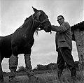 17.09.1964. Cheval à Merville. (1964) - 53Fi4748.jpg