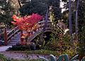 176viki Park szczytnicki. Foto Barbara Maliszewska.jpg
