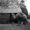 20.11.1961. Animaux au jardin des plantes. (1961) - 53Fi3078.jpg