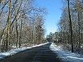 2007 12 06 - PWRC - Loblolly Pine Dr 4.JPG