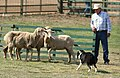 2007 Mendocino County Fair & Apple Show - 14.jpg