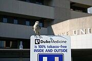 2008-07-24 100 percent tobacco free.jpg