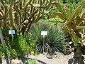 2008 07 Botanical Garden Meran 71590R0405.jpg