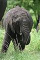20090507-TZ-NGO Safari 350 (4677416811).jpg