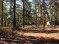 2013-05-10 09 51 34 View south across the picnic area at Pakim Pond in Brendan T. Byrne State Forest.jpg