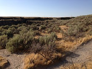 Paleo-climate of the Snake River Plain - Natural vegetation on the Snake River Plain near Shoshone Falls in Idaho