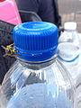 2014-08-24 14 25 22 Yellow Jacket on a Pepsi bottle at Pennridge Airport in East Rockhill Township, Pennsylvania.JPG