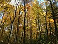 2014-10-30 12 57 44 Trees during autumn in the woodlands along the West Branch Shabakunk Creek in Ewing, New Jersey.JPG