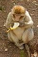2016-04-21 13-44-07 montagne-des-singes.jpg