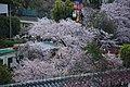 20160403 Himeji-Castle 3373 (26221355183).jpg