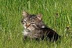 20170501 Kot w trawie 6202.jpg
