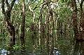 20171129 Mangrove forest Tonle Sap 6032 DxO.jpg