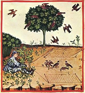 Trapping - Trap nets used to trap birds (tacuinum sanitatis casanatensis); 14th century.