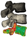 3d vertebrae surface meshes.png