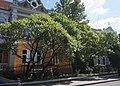 46-106-5012 оцтове дерево.jpg