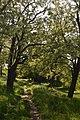 48-104-5002 Komsomol park DSC 4441.jpg