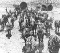52 mule team LA Aqueduct 1912.jpg