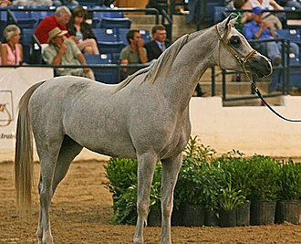Colt (horse) - A two-year-old colt