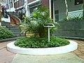 ACSBR Ng Eng Chin tree.JPG
