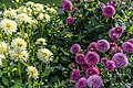 ADD SOME COLOUR TO YOUR LIFE (FLOWERS IN A PUBLIC PARK)-120135 (29194505031).jpg
