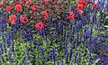 ADD SOME COLOUR TO YOUR LIFE (FLOWERS IN A PUBLIC PARK)-120141 (29273136915).jpg