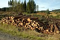 A Log Stack In The Galloway Forest - geograph.org.uk - 1540039.jpg