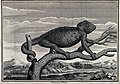 A chameleon on a branch with landscape background. Etching. Wellcome V0022468.jpg