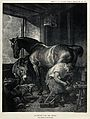 A mare is shod by a farrier in the company of a donkey and a Wellcome V0020861.jpg