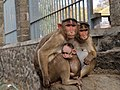 A monkey Family.jpg