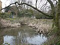A pond at Rodmersham Green - geograph.org.uk - 698868.jpg
