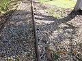Abandoned Railway Darwin - panoramio (4).jpg
