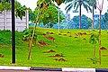 Ada Rusa Nek Mburi Telon - panoramio.jpg