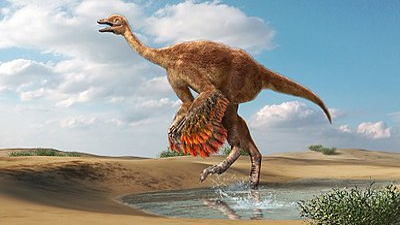 Aepyornithomimus.jpg