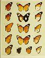 African mimetic butterflies (19394250460).jpg