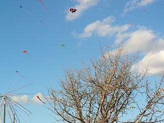 Basant (season) - kitesl 11