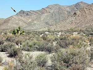 Alamo bolide impact - Landscape showing Alamo impact breccia (arrow) near Hancock Summit, Pahranagat Range, Nevada.