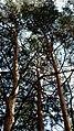 Aleksin, Tula Oblast, Russia - panoramio (95).jpg