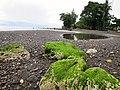 Algae Rock at Kirakira Beach.JPG