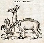 Allocamelus from Topsell's The History of Four-footed Beasts and Serpents.jpg
